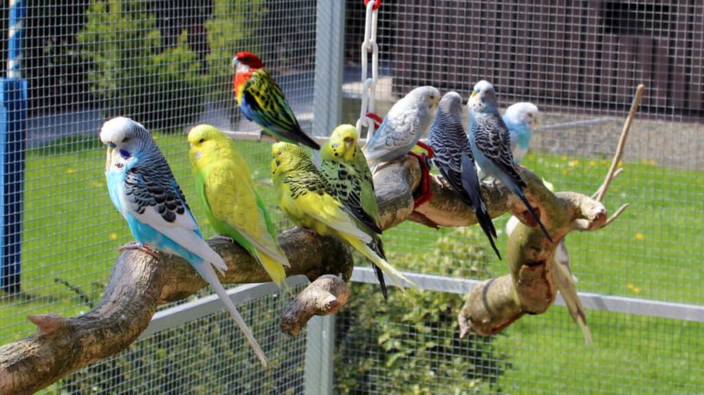 garden bird aviary