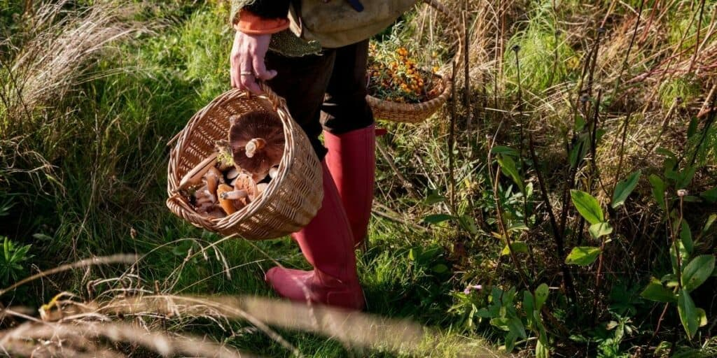 Guide to Foraging