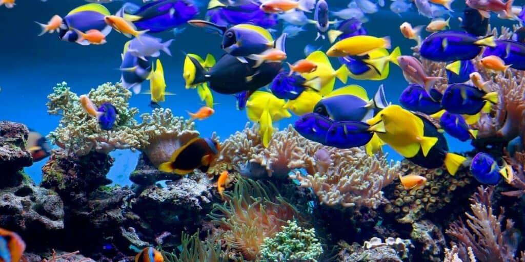 Fish Keeping as a Hobby