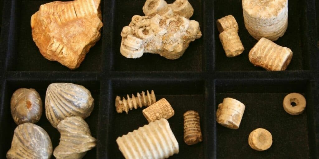 Complete Guide To Fossil Hunting