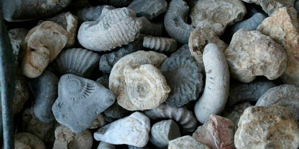 Guide to Fossil Hunting