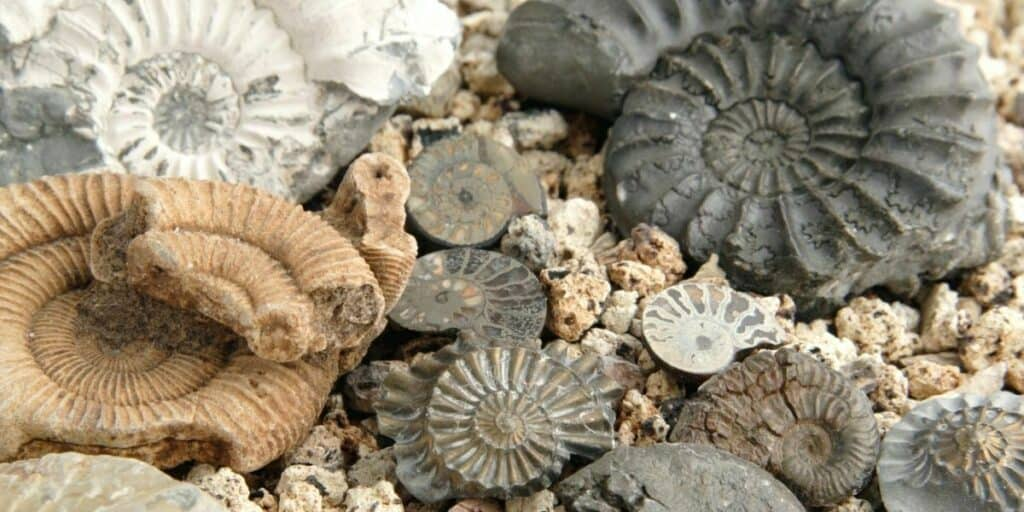 Fossil Hunting as a Hobby
