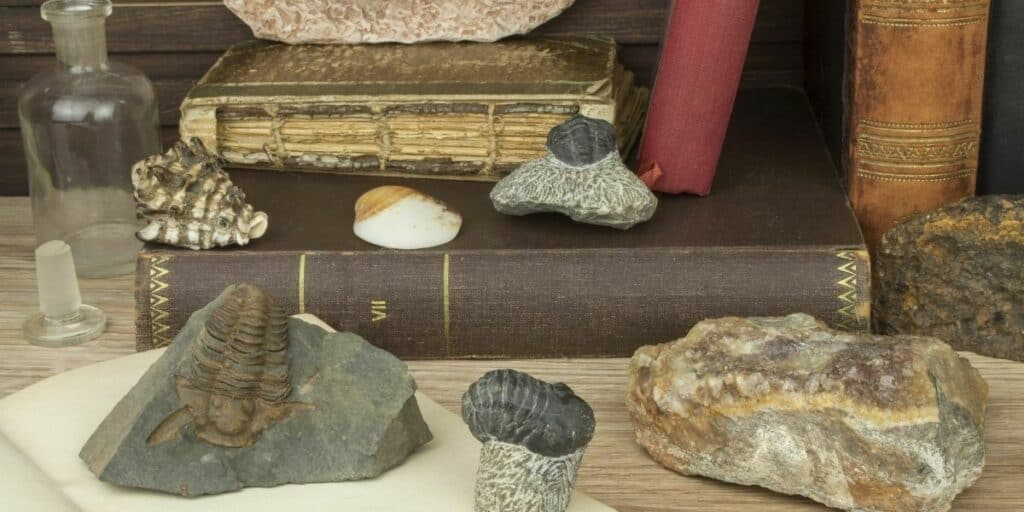 Complete Guide To Fossil Hunting As a Hobby