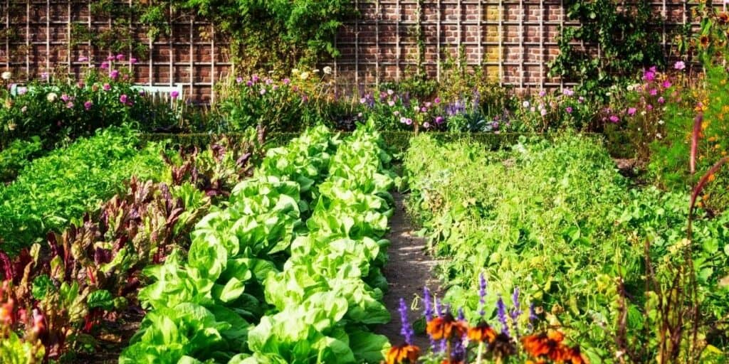 A Guide to Gardening for the Beginner