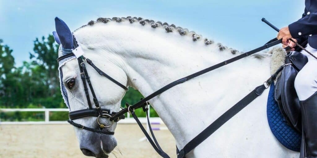 Complete Hobby Guide to Equestrianism