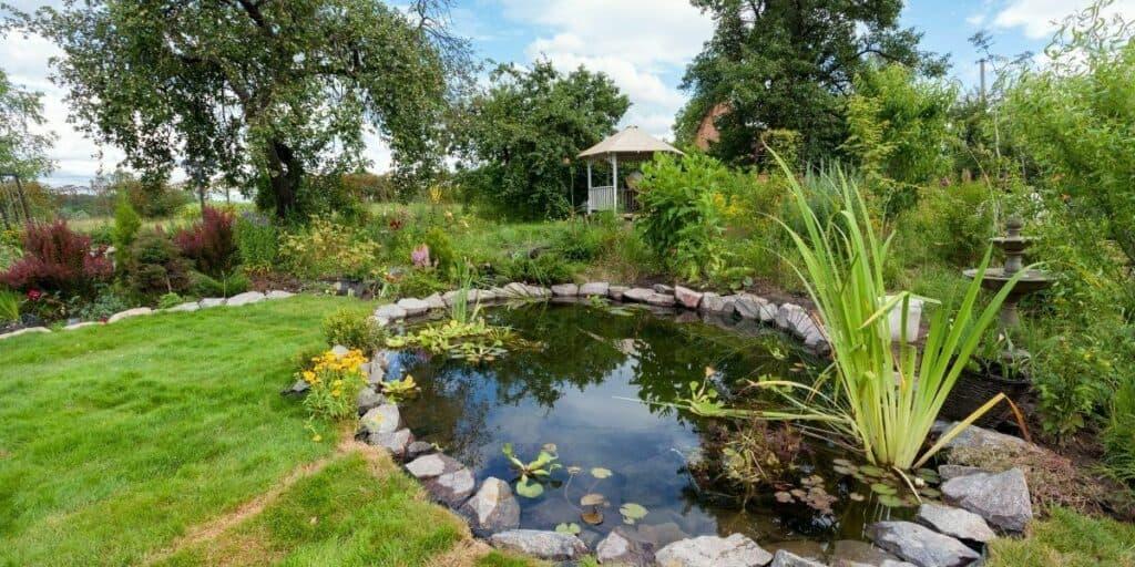 build a fish pond