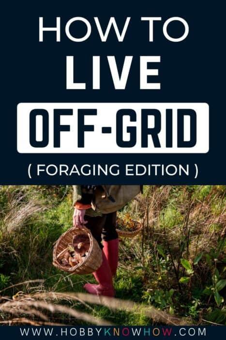 live offgrid foraging