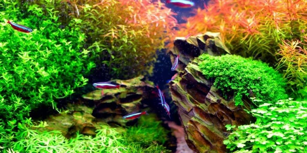 Complete Guide to Aquascaping