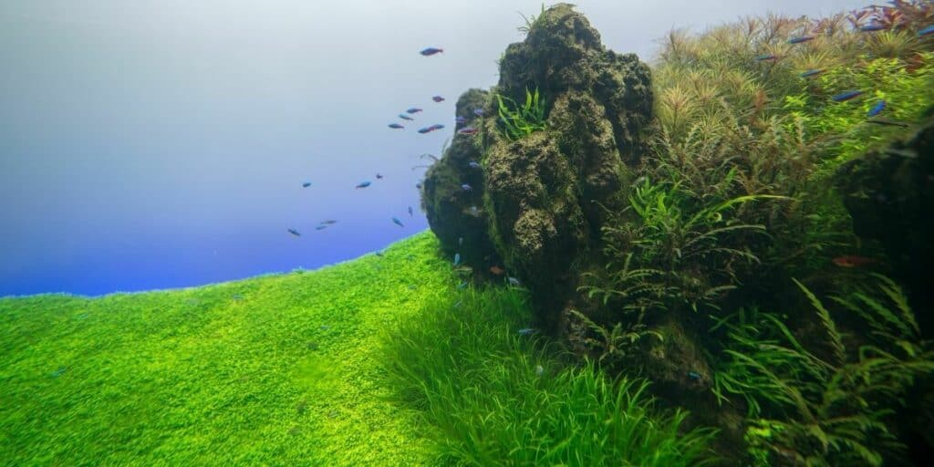 Guide to Aquascaping