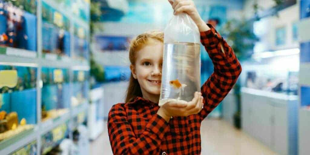 adding new fish to an aquarium