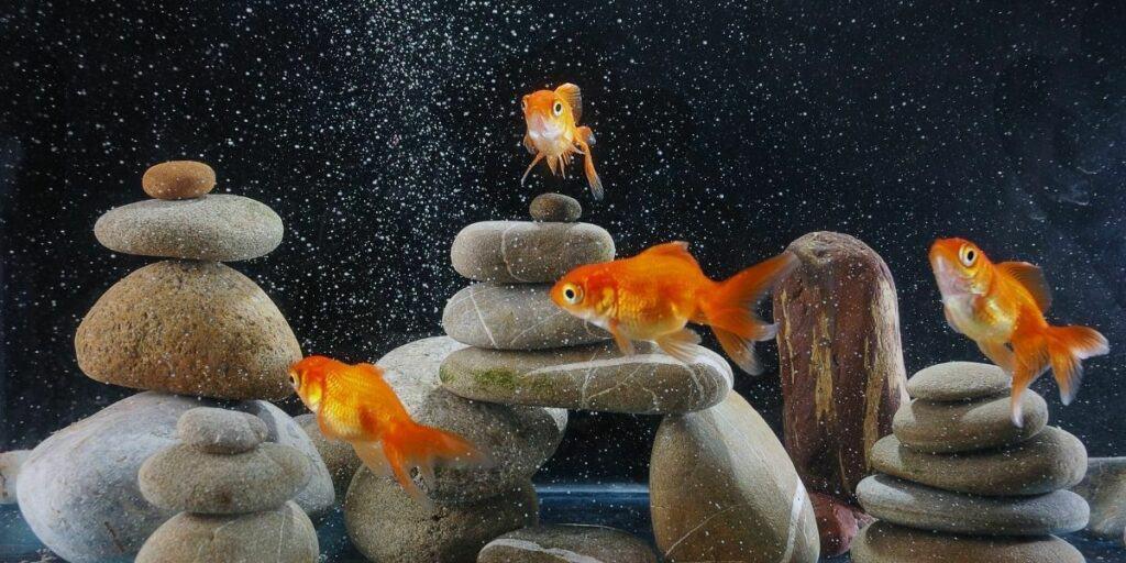 rocks for aquariums