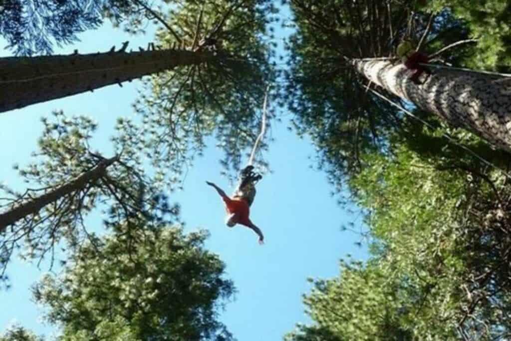 Humboldt, California- Redwood Forest