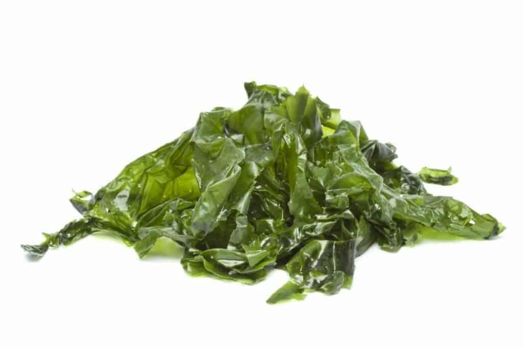 Sea Lettuce (Ulva lactuca)